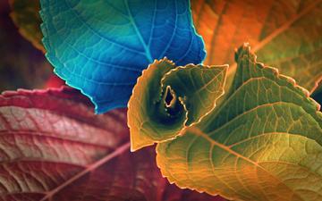 farbe, blätter, makro, design, die pflanze