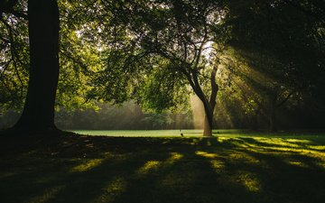 trees, nature, rays, park, branches, the sun's rays