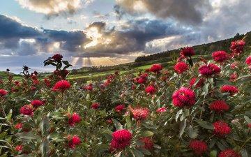 небо, цветы, солнце, природа, лучи, пейзаж, луга, азорские острова, luis melo