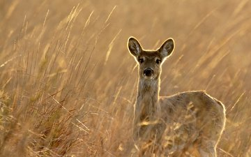 nature, plants, deer, look, autumn, wildlife, roe