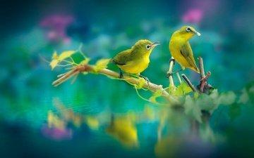 ветка, природа, листья, отражение, птицы, клюв, парочка, перья, белоглазка