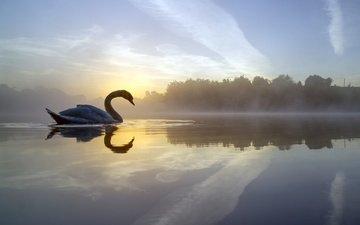 озеро, отражение, утро, туман, птица, лебедь