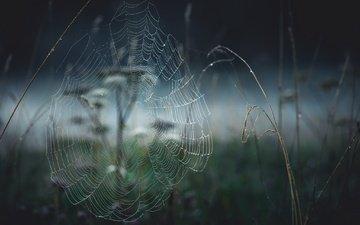 природа, растения, макро, фон, размытость, паутина