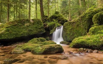 trees, nature, stones, forest, stream, waterfall, moss, river, germany, baden-württemberg, the black forest