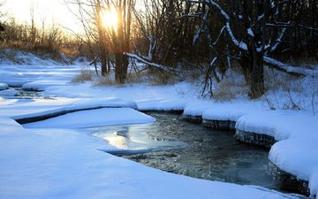 trees, river, snow, nature, winter