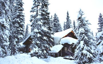 trees, snow, forest, winter, house