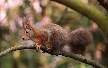 branch, nature, protein, tail