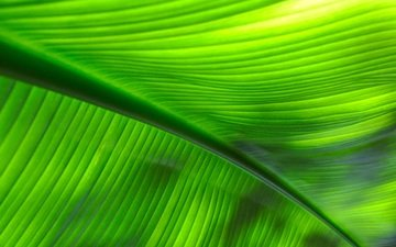 macro, sheet, veins, leaf, close up