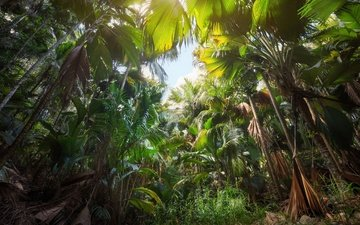 trees, nature, trunks, palm trees, jungle