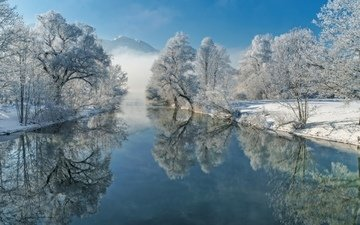 trees, river, winter, reflection, frost