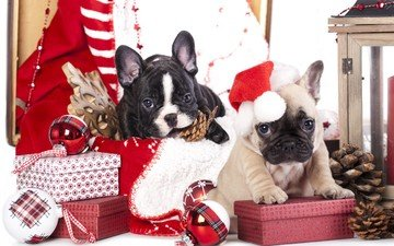 new year, tree, gifts, puppies, christmas, bumps, christmas decorations, dogs, year, french bulldog