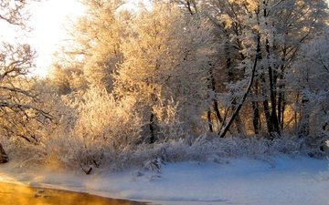 light, river, forest, winter, reflection, frost, orange, gray