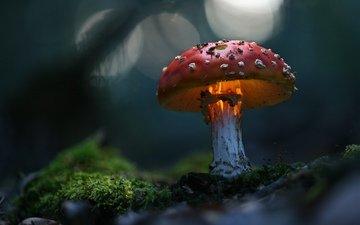 зелень, макро, гриб, волшебно
