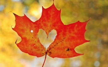 осень, лист, сердце, любовь, кленовый лист, боке