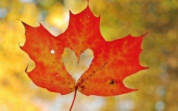 autumn, sheet, heart, love, maple leaf, bokeh