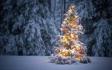 snow, new year, forest, winter, frost, spruce, holiday, christmas
