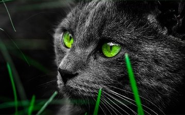 eyes, animals, cat, look, green