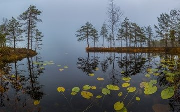 grass, lake, fog, dawn, autumn, pine, water lilies, october
