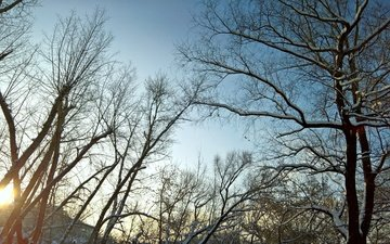 the sky, trees, the sun, snow, nature, winter, morning, branch