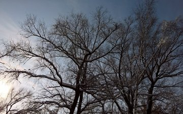 the sky, clouds, trees, snow, winter, branches, day