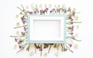 цветы, лепестки, рамка, кадр, цветы, декорация, декор