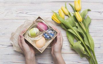 цветы, весна, тюльпаны, руки, пасха, яйца, подарок, праздник, коробка