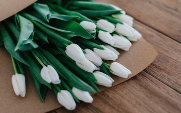 бутоны, доски, весна, букет, тюльпаны, белые, много, пакет