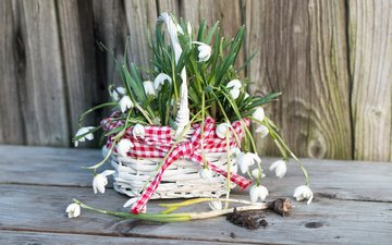 цветы, букет, романтик, подснежники, дерева, цветы, весенние