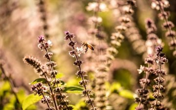 nature, plants, macro, insect, blur, bee, wildflowers