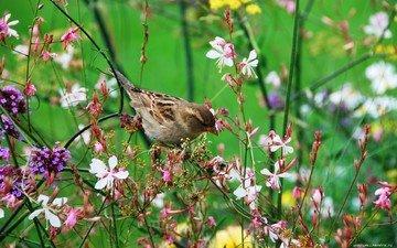 цветы, природа, листья, ветки, лепестки, птица, воробей, растение
