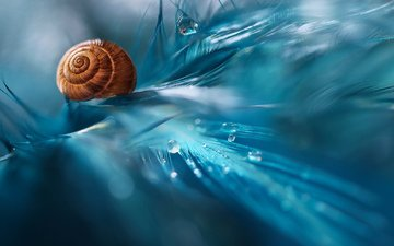 macro, drops, color, snail, pen