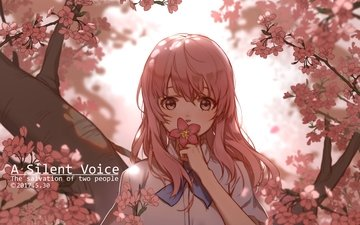 girl, look, hair, face, cherry blossom, pink hair, nishimiya shouko, koe no katachi