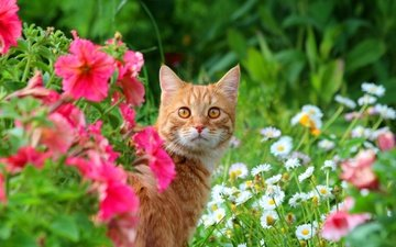 flowers, cat, muzzle, look, meadow, animal