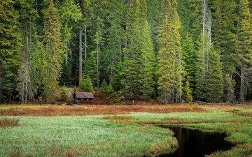 trees, nature, forest, landscape, house, oregon