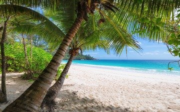 shore, sea, sand, beach, summer, palm trees, tropics