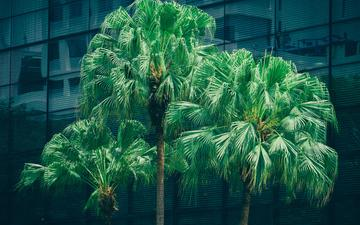 trees, trunks, foliage, palm trees
