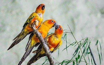 ветки, птицы, клюв, перья, попугаи, jeanot94