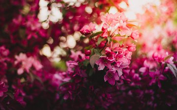 light, flowers, branch, flowering, spring, cherry