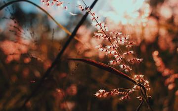light, branch, nature, macro, plant