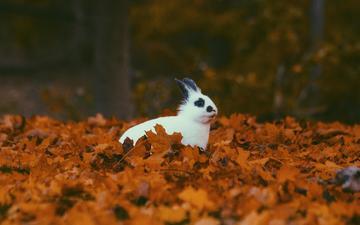 листья, листва, осень, кролик, животное, уши