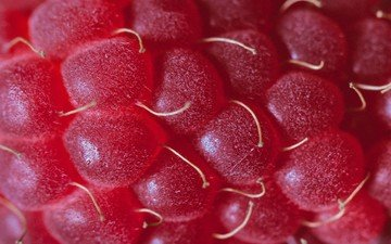 raspberry, berry, closeup