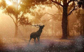 свет, деревья, солнце, лес, олень, рога