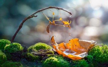 вода, природа, макро, насекомое, капли, лист, веточка, мох, богомол, боке, roberto aldrovandi