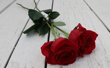 flowers, buds, roses, petals, wooden surface