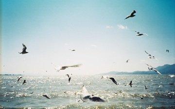 небо, море, полет, птицы, чайки