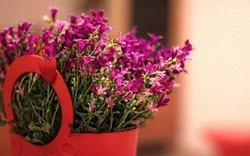 цветы, розовые, букетик, полевые цветы, корзинка