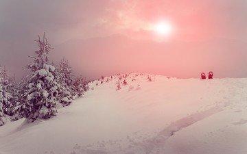 деревья, снег, природа, зима, пейзаж