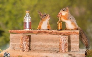 animals, humor, seeds, proteins, rodents, bottle