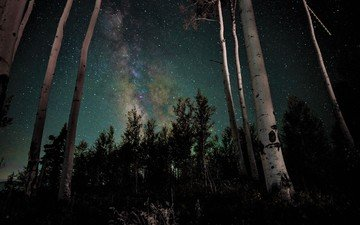 night, trees, forest, stars, trunks, birch, galaxy, the milky way
