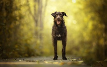 nature, muzzle, look, dog, each